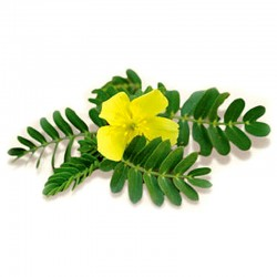 Tribulus terrestris leaves - 50g
