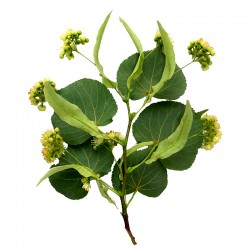 Small-leaved lime flower - 30g