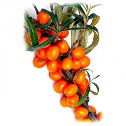Sea-buckthorn fruit - 50g