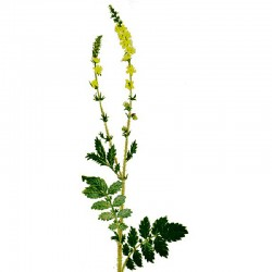 Agrimony leaves - 50g