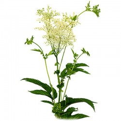 Meadowsweet leaves - 50g