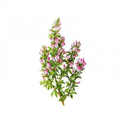 Spiny restharrow root - 50g
