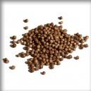 Koriandr (Coriandrum sativum) - sušený plod celý