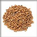 HOŘČICE/Horčica (Semen sinapis) - semeno celé