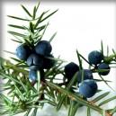 JALOVEC obecný/Borievka obyčajná (Juniperus communis) - plod