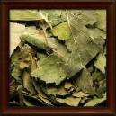 BŘÍZA BĚLOKORÁ - Sušený list (Folium betulae pendulae)