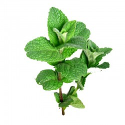 Peppermint leaves - 50g
