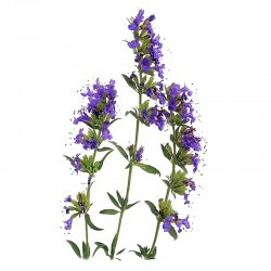 Hyssop leaves - 50g