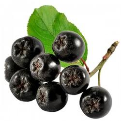 Black chokeberry (Aroniae melanocarpa)