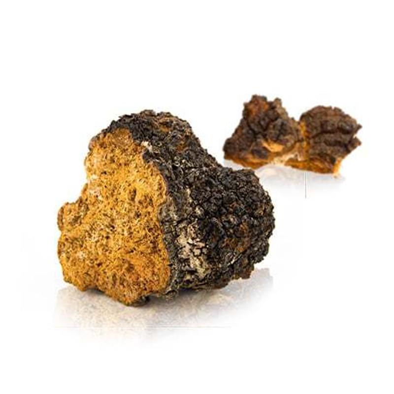Chaga wilden wald pilz Extract - 90 Kapseln, Inonotus obliquus