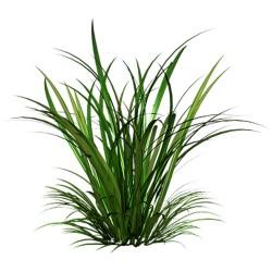 Palczatka/Trawa cytrynowa - 35 g