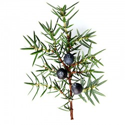 Juniper fruit - 35g