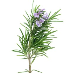 Rosemary leaves - 35 g