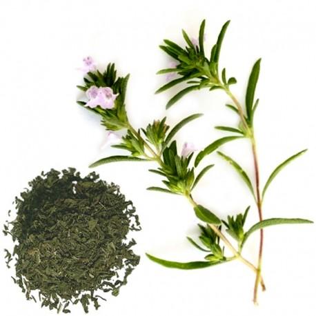 Saturejka zahradní (Satureia hortensis)