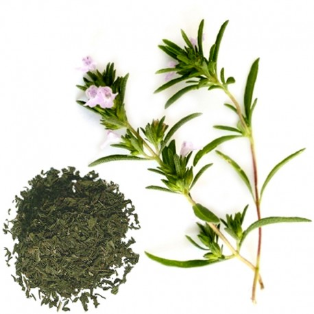 Saturejka záhradná (Satureia hortensis)