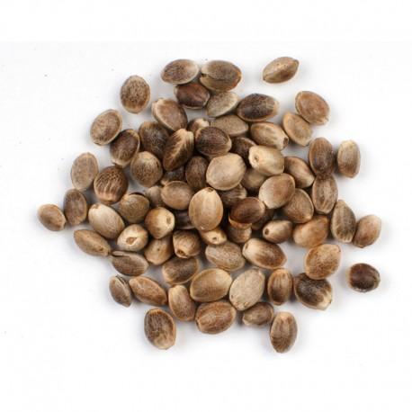 Konopné semienko nelúpane