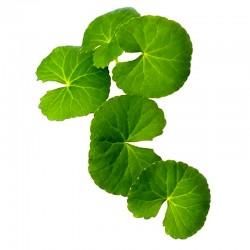 Centella, Gotu kola - leaf - 50g