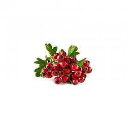 Hawthorns dried berries - 50g