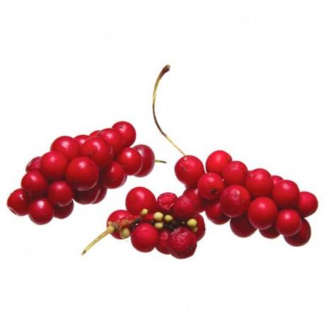 Chinesische Spaltkörbchen (Schisandra chinensis)