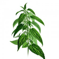 Stinging nettle leaves - 50g